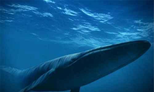 比蓝鲸重10000倍的动物_WWW.171ZZ.NET