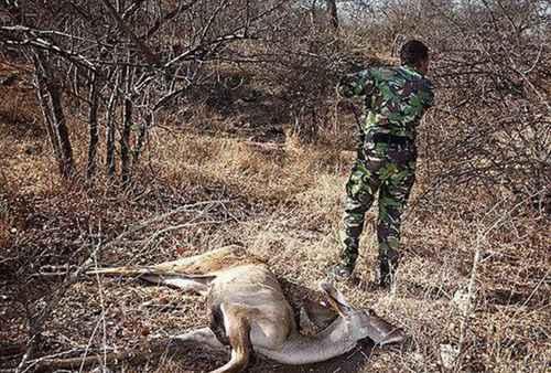 保护野生动物的意义_WWW.171ZZ.NET