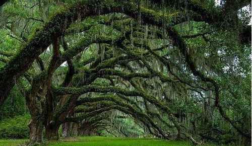 世界上最恐怖的吸血树_WWW.171ZZ.NET