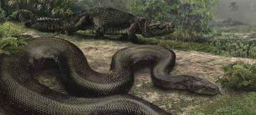 远古沃那比蛇是什么蛇_WWW.171ZZ.NET