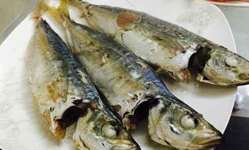 巴浪鱼的营养价值_WWW.171ZZ.NET