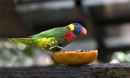 世界上最聪明的鹦鹉排行榜_WWW.171ZZ.NET