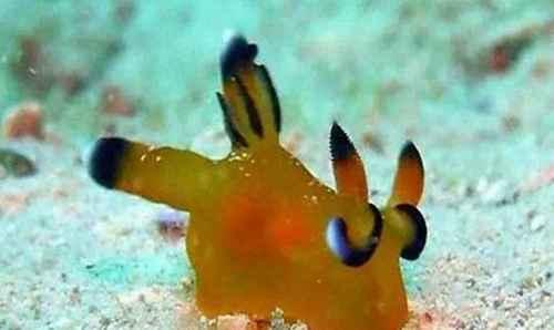 海兔子是小鱿鱼吗_WWW.171ZZ.NET
