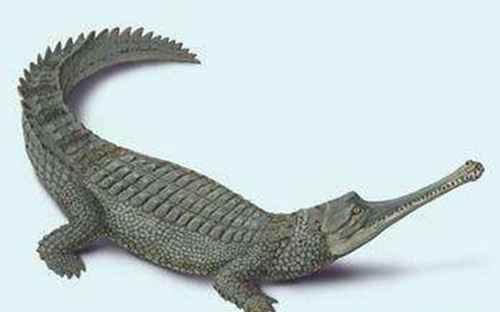世界十大最大鳄鱼_WWW.171ZZ.NET