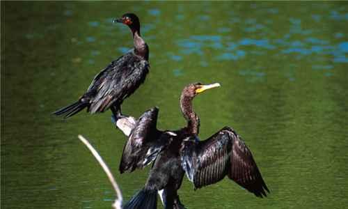 世界上最会捕鱼的鸟类是什么_WWW.171ZZ.NET