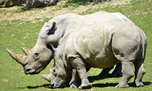 世界珍稀动物仅剩一只_WWW.171ZZ.NET