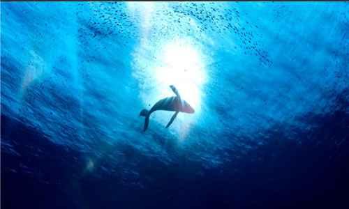 为什么鲸鱼代表爱情_WWW.171ZZ.NET