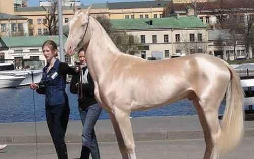 世界上最漂亮的10匹马_WWW.171ZZ.NET