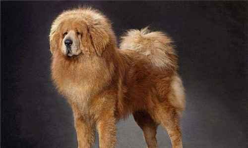 世界上最贵的十大宠物_WWW.171ZZ.NET