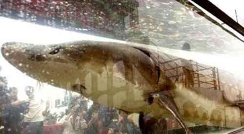 世界上最大的淡水鱼种_WWW.171ZZ.NET