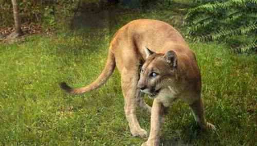 世界上16种即将灭绝的动物_WWW.171ZZ.NET