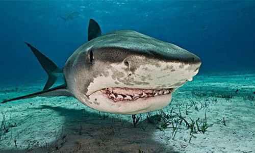 世界上最强的三大鲨鱼_WWW.171ZZ.NET