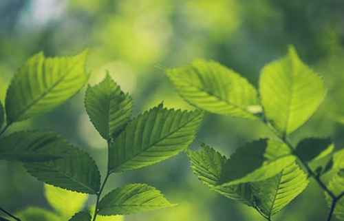 哪些植物具有神奇之处_WWW.171ZZ.NET