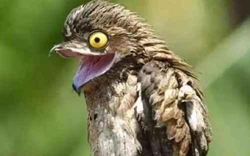 世界上最会伪装的鸟_WWW.171ZZ.NET