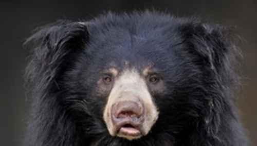 北极熊灭绝真的假的_WWW.171ZZ.NET
