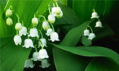 世界上最毒的植物排行榜_WWW.171ZZ.NET