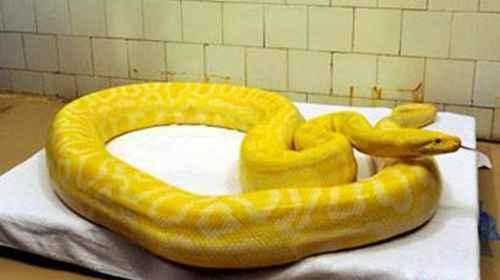 世界上最稀有的蛇_WWW.171ZZ.NET