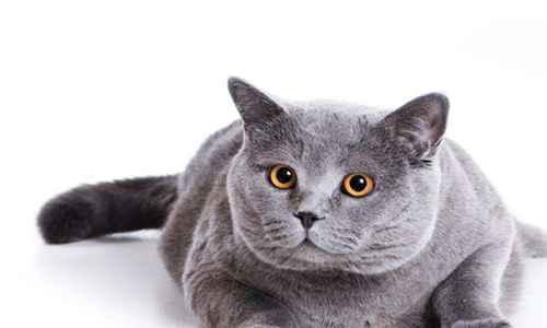 为什么说养猫穷三代_WWW.171ZZ.NET