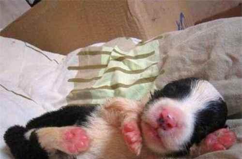 怎样养几天大的小狗崽_WWW.171ZZ.NET