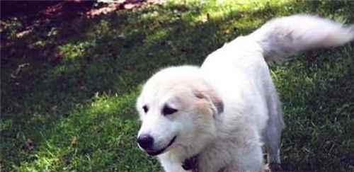 狗狗尾巴的各种动作代表什么_WWW.171ZZ.NET