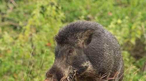 人们从哪种动物身上发明防毒面具?_WWW.171ZZ.NET