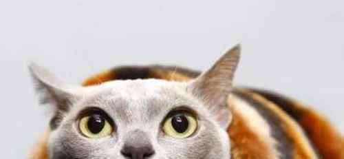 猫咪绝育的注意事项_WWW.171ZZ.NET