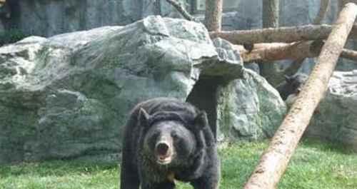去北京动物园看什么动物_WWW.171ZZ.NET