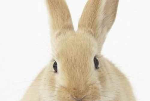 兔子容易死的情况_WWW.171ZZ.NET