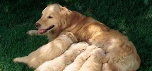 幼犬喂养的正确方法及注意事项_WWW.171ZZ.NET