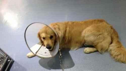 狗狗做完绝育手术要怎样护理_WWW.171ZZ.NET