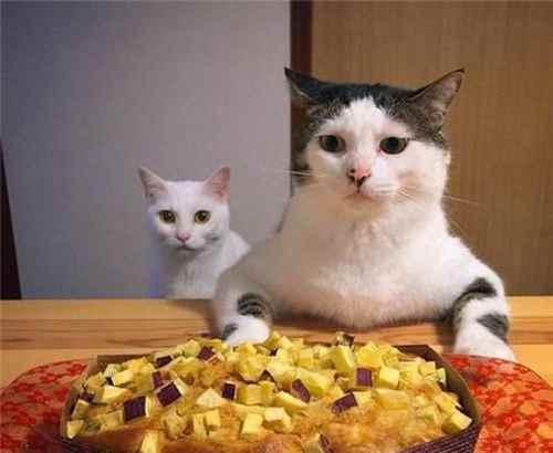 怎样给小猫喂猫粮?一点经验_WWW.171ZZ.NET