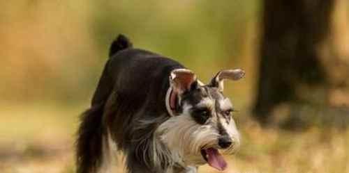 怎么教狗狗在外面大小便_WWW.171ZZ.NET