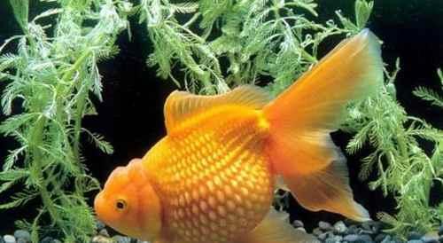 养鱼需要注意哪些方面?_WWW.171ZZ.NET