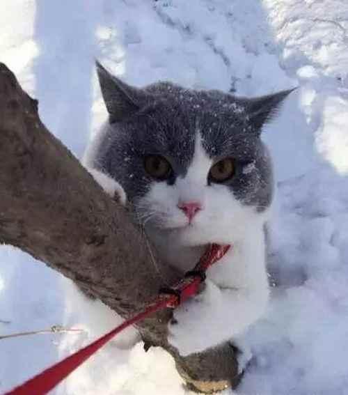 怎样正确溜猫咪_WWW.171ZZ.NET