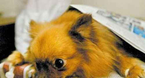 狗狗去螨虫最好的方法,狗狗除螨虫的简单方法_WWW.171ZZ.NET