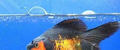 如何淹死一只鱼?_WWW.171ZZ.NET
