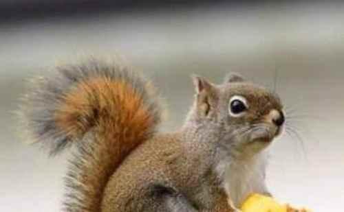 家养松鼠的喂养_WWW.171ZZ.NET