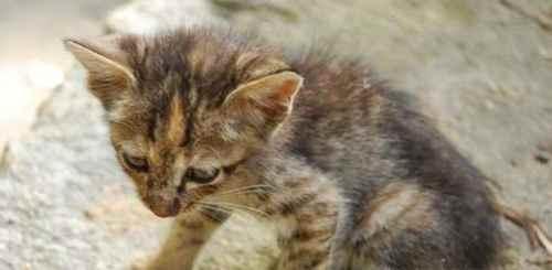 怎样正确救助流浪猫?_WWW.171ZZ.NET