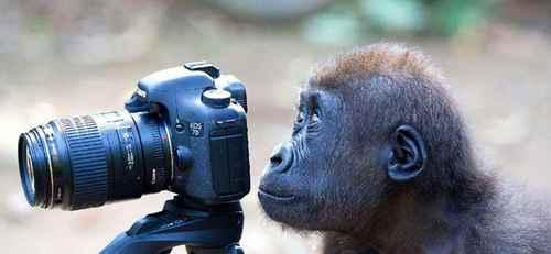 动物会把自己当成别的动物去模仿吗?_WWW.171ZZ.NET