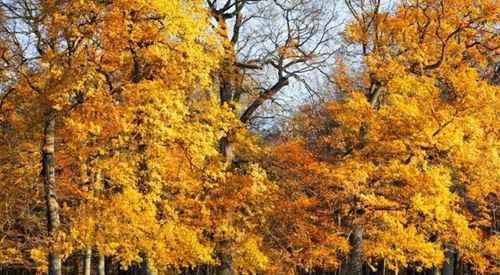 为什么树木在秋天的时候会落叶?_WWW.171ZZ.NET