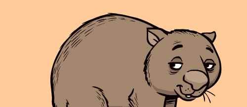袋熊为什么能拉出立方体便便?_WWW.171ZZ.NET