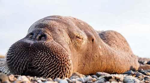 海洋中的瞌睡大王是什么动物?_WWW.171ZZ.NET