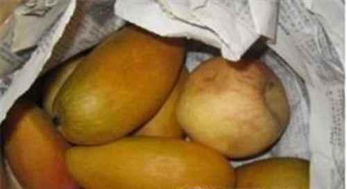 生的芒果怎么吃?芒果是怎样变黄的_WWW.171ZZ.NET