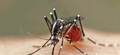 如何简单有效的防蚊子_WWW.171ZZ.NET