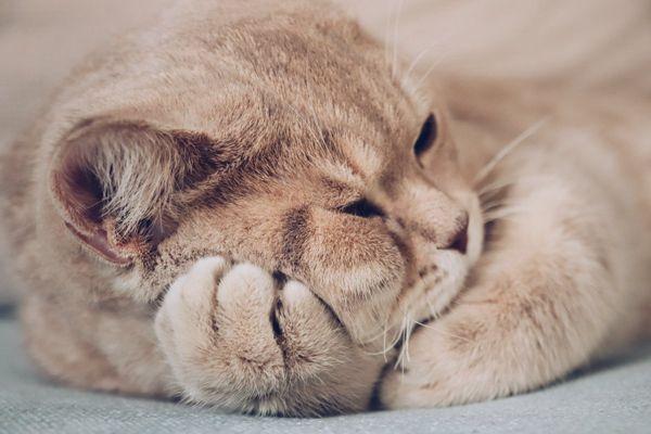 可爱猫咪壁纸图片_WWW.171ZZ.NET