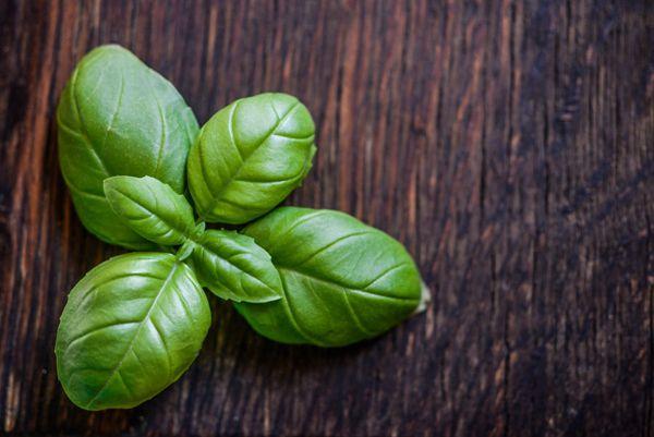 绿色鲜嫩的罗勒图片_WWW.171ZZ.NET