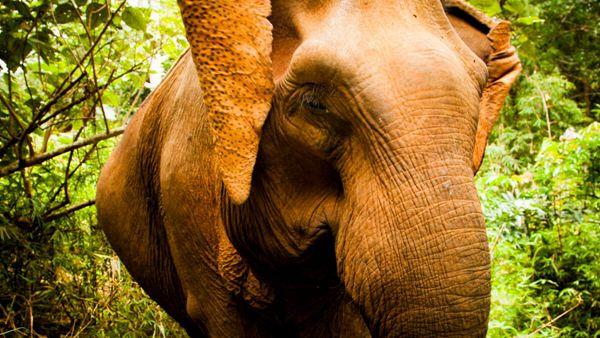 体型庞大的大象图片_WWW.171ZZ.NET