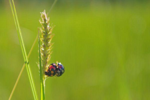 植物上的瓢虫图片_WWW.171ZZ.NET
