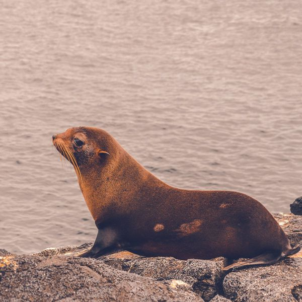 一只海狮特写图片_WWW.171ZZ.NET