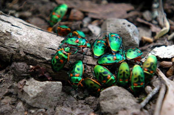 绿色甲虫图片_WWW.171ZZ.NET